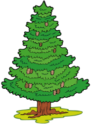 Fir, conifer tree Game