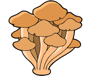 Armillaria mellea, fungus that grows in groups Game