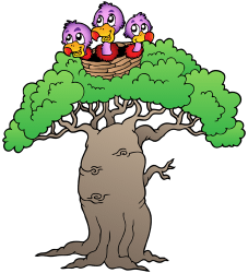 Baobab, tree from Africa, Asia and Australia Game