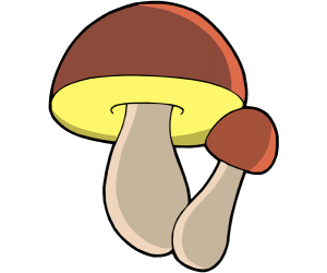 Boletus edulis, the most prized mushrooms, porcini Game