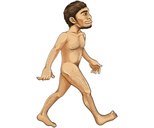 Homo erectus, use of tools and fire Game