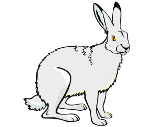 The Arctic hare or the polar rabbit Game