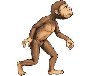 The first bipedal hominid, Australopithecus Game