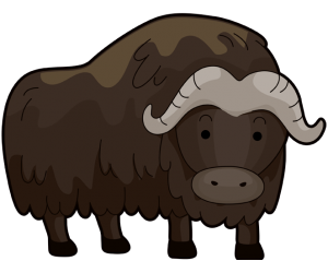 The musk ox or muskox, mammal of the Arctic tundra Game