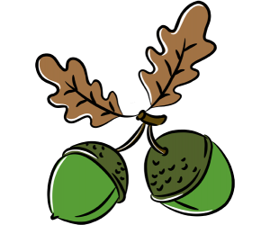 Two acorns and leaves of oaks Game